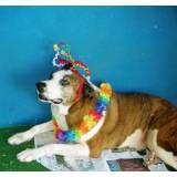 Onde encontrar hotel de cão no Morumbi