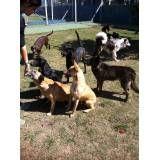 Onde encontrar hotel para cão no Morumbi