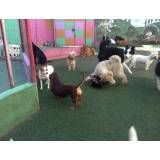 Onde encontrar hotelzinho de cachorro na Cidade Jardim