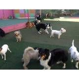 Onde encontrar hotelzinho de cachorros  no Pacaembu