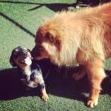 Onde encontrar hotelzinho de cães  no Itaim Bibi
