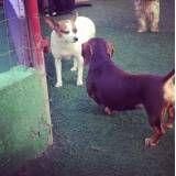 Onde encontrar hotelzinho para cães em Embu Guaçú
