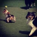 Onde tem adestrador para cachorro no Campo Belo