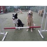 Onde tem adestrador para cachorro no Rio Pequeno