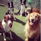 Onde tem adestrador para cachorros em Alphaville