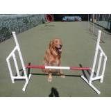 Onde tem adestrador para cachorros em Interlagos