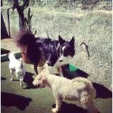 Onde tem adestrador para cão no Jardim Bonfiglioli