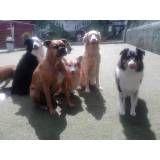 Onde tem adestradores para cachorro no Jardim América
