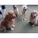 Onde tem adestradores para cachorro no Jardim Bonfiglioli