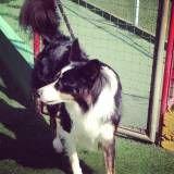 Onde tem adestradores para cães em Taboão da Serra