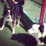 Onde tem adestradores para cães na Vila Sônia
