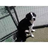 Onde tem adestradores para cães no Rio Pequeno