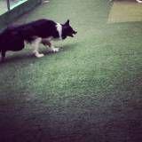 Onde tem adestradores para cão em Santana de Parnaíba