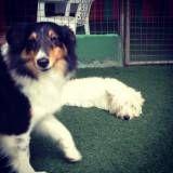 Onde tem adestradores para cão na Vila Mariana