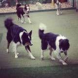 Onde tem adestradores para cão no Sacomã