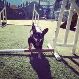 Onde tem adestramento de cachorros em Santana de Parnaíba