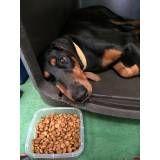 Onde tem adestramento de cães em Pinheiros