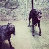 Onde tem Daycare de cachorro no Jardim América