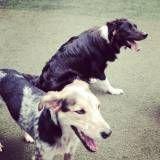Onde tem Daycare de cães em Vargem Grande Paulista