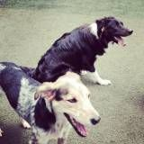 Onde tem Daycare de cães na Pedreira