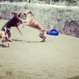 Onde tem Daycare para cachorros no Rio Pequeno