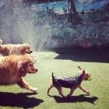 Onde tem Daycare para cães no Campo Belo