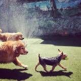 Onde tem Daycare para cães no Jardim Europa