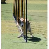 Onde tem hotéis de cachorros em Jandira