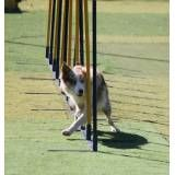 Onde tem hotéis de cachorros no Socorro
