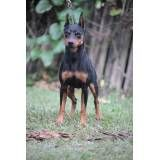 Onde tem hotéis para cães no Rio Pequeno