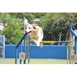 Onde tem hotel para cão no Ibirapuera