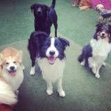 Preço de adestrador para cachorro em Itapevi