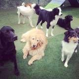 Preço de adestrador para cachorro no Pacaembu