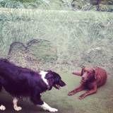 Preço de adestrador para cachorros em Santo Amaro