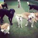 Preço de adestrador para cachorros no Rio Pequeno