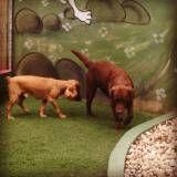 Preço de adestrador para cães em Moema
