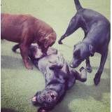 Preço de adestrador para cães no Aeroporto