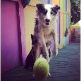 Preço de adestrador para cães no Morumbi
