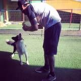 Preço de adestrador para cão em Jandira