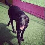 Preço de adestrador para cão em Osasco