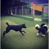Preço de adestrador para cão na Vila Sônia