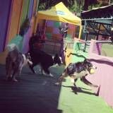 Preço de adestrador para cão no Ibirapuera