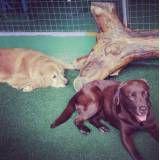 Preço de adestradores de cachorro em Moema