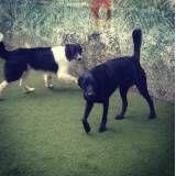 Preço de adestradores para cães em Barueri
