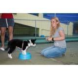 Preço de adestradores para cães no Jardim Europa