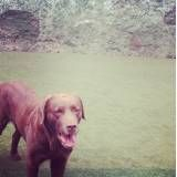 Preço de adestradores para cão em Interlagos