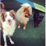 Preço de adestradores para cão no Jardim América