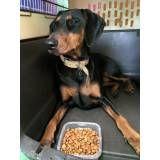 Preço de adestramento para cães no Jockey Club