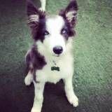Preço de adestramento para cão no Aeroporto