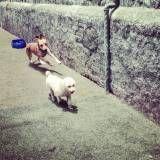 Preço de creche de cachorro em Jandira